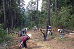 La vigilancia participativa que realiza la Comunidad Indígena Francisco Serrato en los bosques de la RBMM, representa tanto una oportunidad como una necesidad para asegurar la conservación de los recursos naturales del área protegida. Estas brigadas trabajan directamente en la vigilancia de las hectáreas forestales pertenecientes a la comunidad, pero se involucran también en actividades de restauración y conservación evitando la perdida de superficie forestal, biodiversidad y los servicios ambientales asociados.