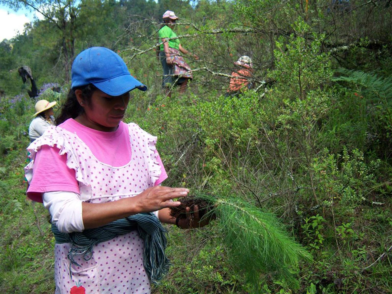 Reforestación Comunitaria