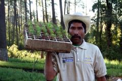Ejemplares de la producción de planta en viveros comunitarias de la Reserva de la Biosfera Mariposa Monarca