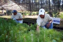 Producción de planta nativa de la Región Mariposa Monarca